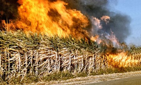 burning_off_fields